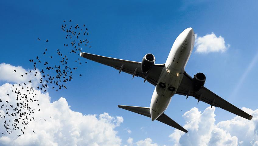 Airplane, services, airfreight, Delta-Stallion Internationale Transport GmbH